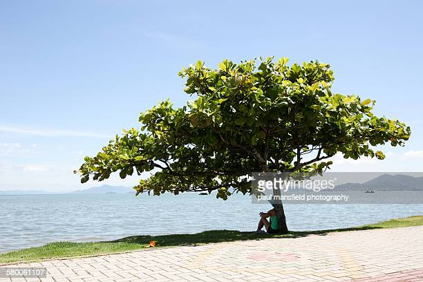 lady sitting under tree - shade stock pictures, royalty-free photos & images