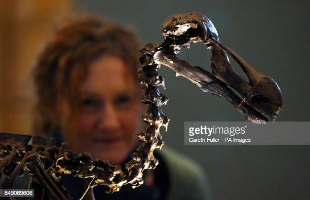 A lady views the skeleton of a Dodo at the press launch of the the new Treasures Gallery at the Natural History Museum London Picture date Tuesday...