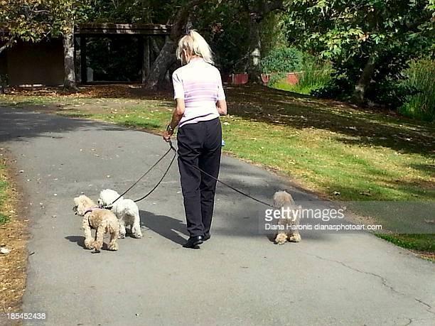 Lady walking three dogs