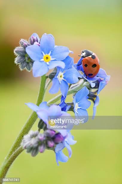 Ladybird in garden