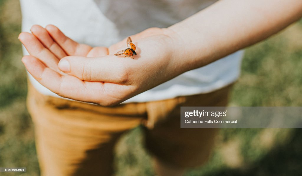 Ladybird landing on a Child's Hand : Stock Photo