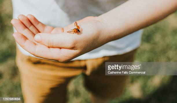 ladybird landing on a child's hand - touching stock pictures, royalty-free photos & images