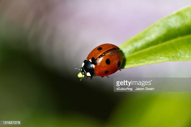 ladybird macro bokeh - s0ulsurfing stock pictures, royalty-free photos & images