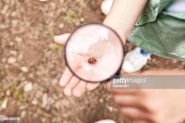 Ladybird on girls hand under magnifying glass