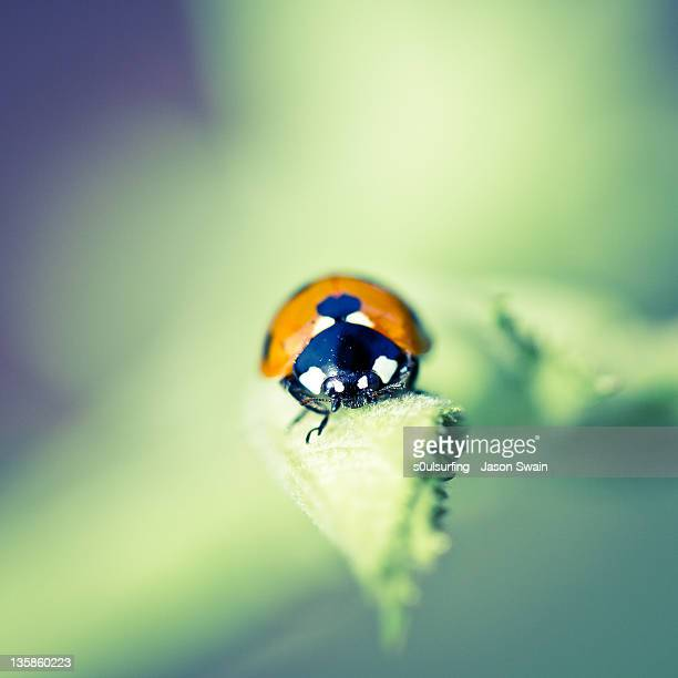 ladybird on leaf - s0ulsurfing stock pictures, royalty-free photos & images