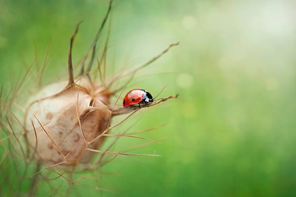 Ladybird On Seed Pod Wall Art