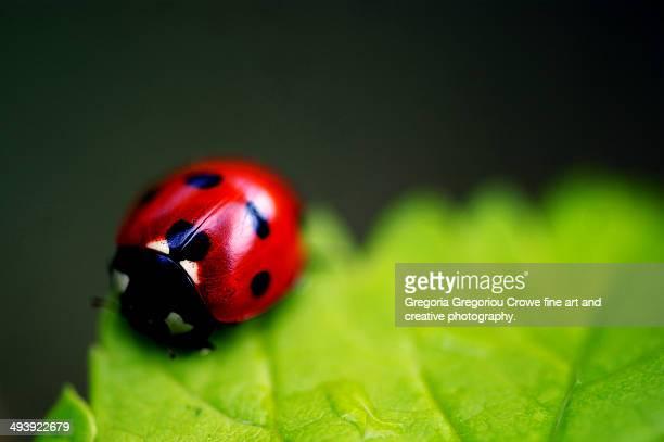 ladybird - gregoria gregoriou crowe fine art and creative photography stockfoto's en -beelden
