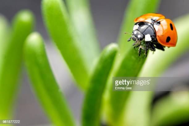 ladybird pre-flight check - pre season bildbanksfoton och bilder