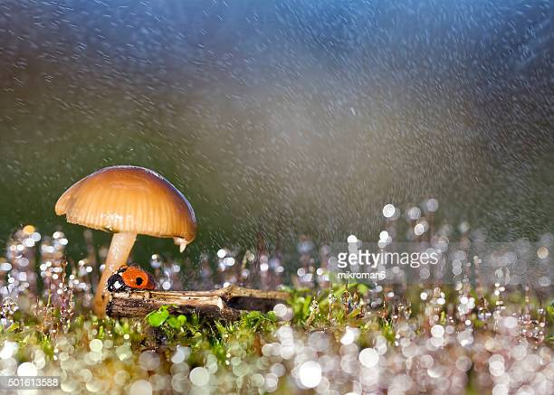 ladybird under mushrooms - seven spot ladybird stock pictures, royalty-free photos & images