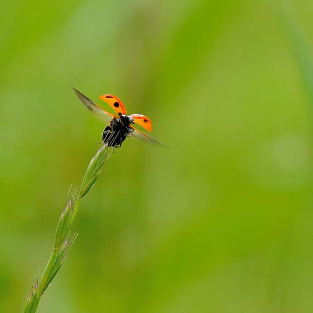 Ladybug Begins To Fly Away. Wall Art