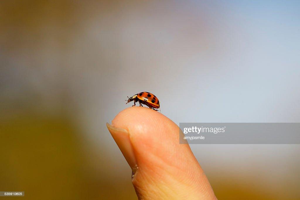 Ladybug gets a nice view. : Stock Photo