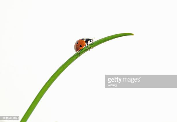 ladybug on grass - ladybird stock pictures, royalty-free photos & images