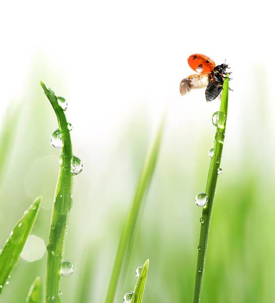 Ladybug On Green Grass Wall Art