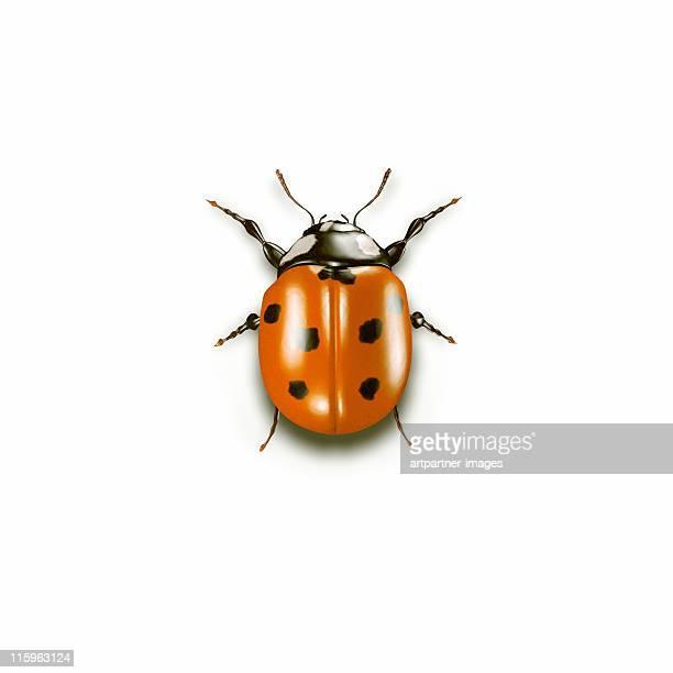 ladybug on white background - ladybird stock pictures, royalty-free photos & images