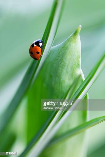 ladybug - andrew dernie ストックフォトと画像