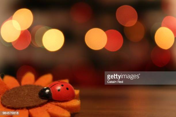 ladybug - christmas beetle stock pictures, royalty-free photos & images