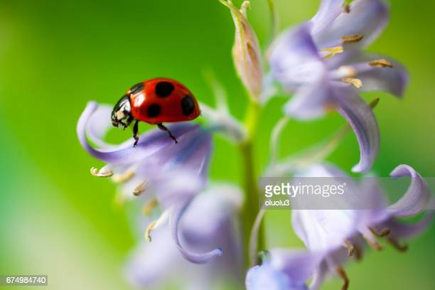 Mariquita se sienta en una flor