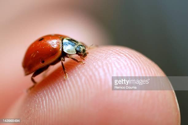 Ladybug sitting on fingertip