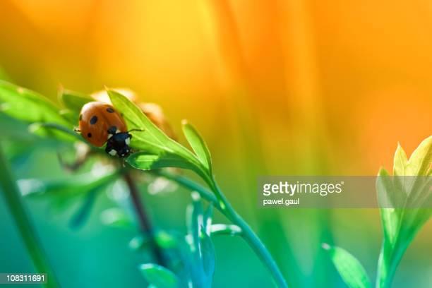 Marienkäfer sitzt auf Wildblumen im Sonnenuntergang