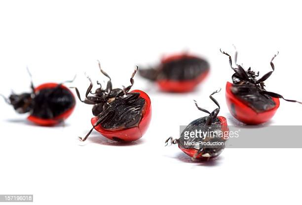 ladybugs Necessita de ajuda!