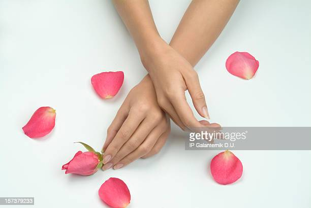 Lady's hands touching flowers