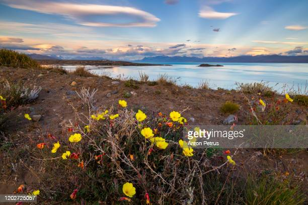 lago argentino at sunrise. el calafate, argentina, patagonia - los glaciares national park stock pictures, royalty-free photos & images