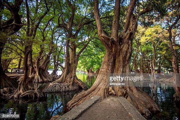 lago de camécuaro national park - paisajes de mejico fotografías e imágenes de stock