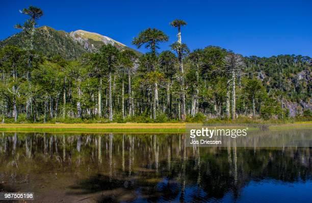 Lago El Toro in the Chile Lake District