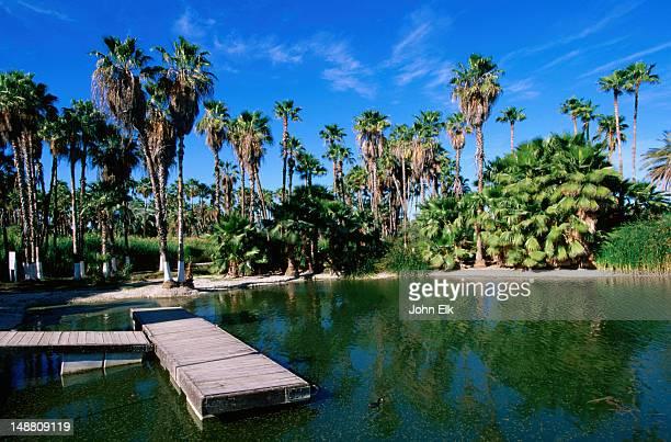lagoon, estero de san jose overlook. - gulf coast states stock pictures, royalty-free photos & images