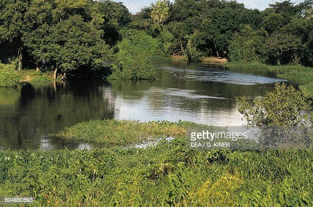 Lagoon Gran Chaco Paraguay