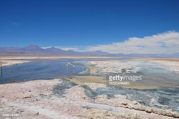 Lagoon in the Salar d'Atacama