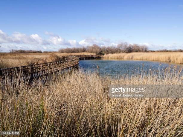 Lagoon of water surrounded with reed-grasses and crossed by a gangplank of wood, Tablas de Daimiel, Spain.