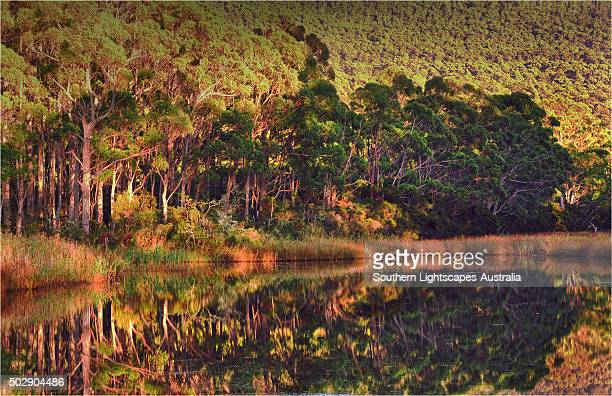 Lagoon reflections, Adventure bay, South Bruny Island, Tasmania.