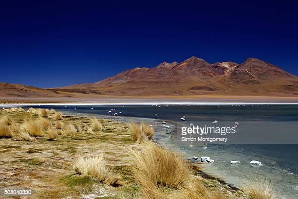 Laguna Canapa in Bolivia