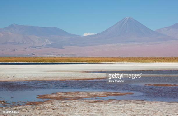 laguna cejar in the atacama desert, chile. - alex saberi stockfoto's en -beelden