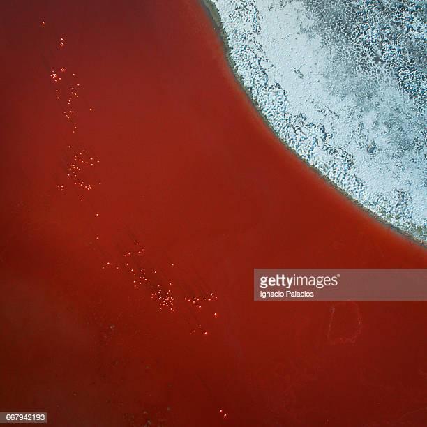 Laguna Colorada aerial drone Red Lagoon