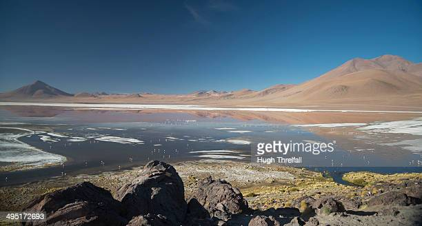 laguna colorada, southern bolivia - hugh threlfall stock pictures, royalty-free photos & images