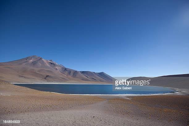 laguna miscanti in the atacama desert with a volcano. - alex saberi stockfoto's en -beelden