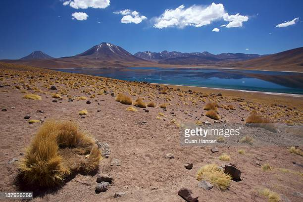 Laguna Miscanti, Los Flamencos National Reserve, Atacama Desert, Antofagasta Region, Norte Grande, Chile, South America