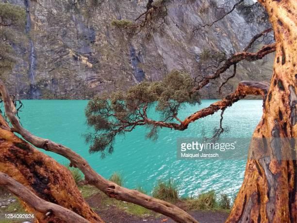 lagunas llanganuco, a turquoise lakes in peru - patagonische anden stock-fotos und bilder