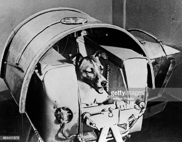 Laika Russian cosmonaut dog 1957 Laika was the first animal to orbit the Earth travelling on board the Sputnik 2 spacraft launched on 3 November 1957...