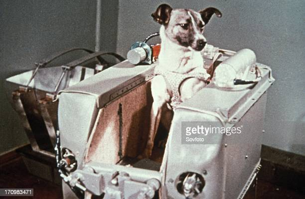 Laika the first dog in space in the sputnik 2 capsule
