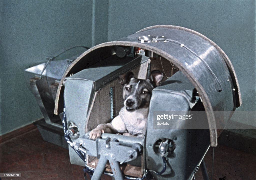 Laika, a stray dog from the streets of Moscow, became the first dog in space aboard Sputnik 2 on 3rd November 1957