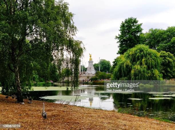 lake amidst trees at park - international landmark stock pictures, royalty-free photos & images