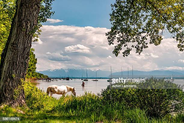 lake ammersee, upper bavaria - achim lammerts stock pictures, royalty-free photos & images