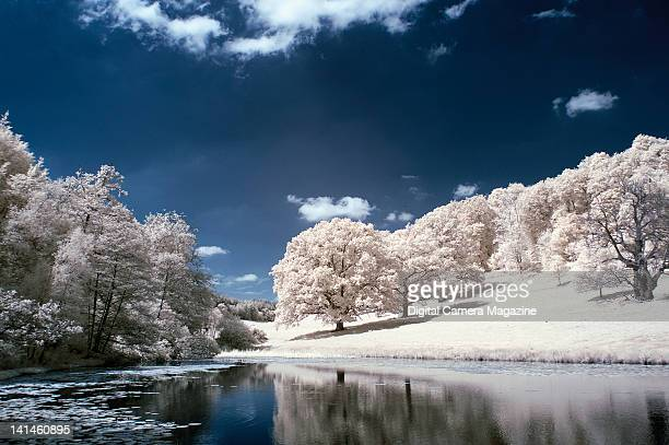 A lake and bank of trees shot in infra red light taken on June 30 2009
