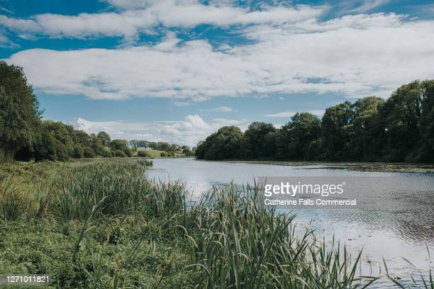 lake and blue sky - landscape scenery stock pictures, royalty-free photos & images