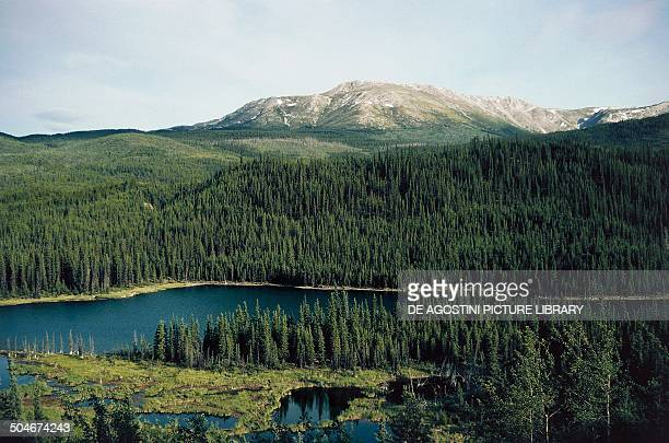 Lake and coniferous forest Yukon Canada