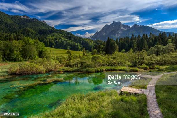 lake and forest in zelenci springs, kranjska gora, upper carniola, slovenia - slovenia stock pictures, royalty-free photos & images