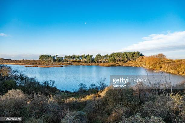 Lake and pine trees at Nationaal Park Zuid-Kennemerland is a Dutch National Park between Bloemendaal and the North Sea Canal established in 1950,...